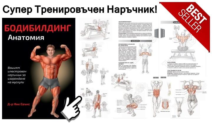 Бодибилдинг Анатомия
